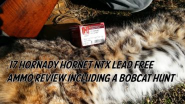 17 Hornady Hornet NTX Lead Free Ammo Review including a Bobcat Hunt